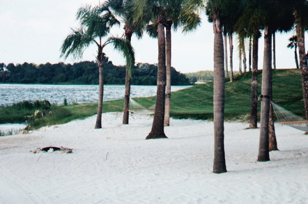 Hammock connected to palm trees on a lazy beach