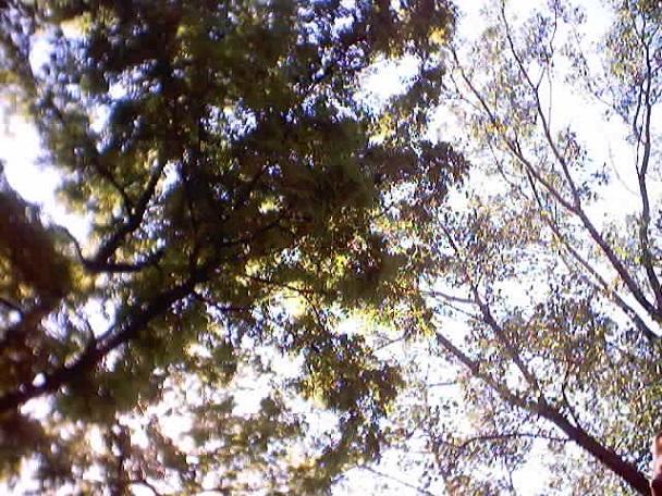 Renaissance trees
