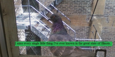Pigeon hanging out on the windowsill next to the fire escape in Chicago
