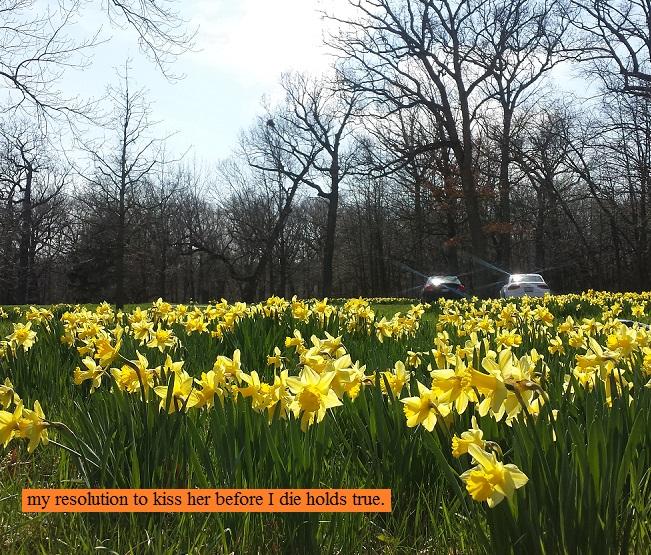 Field of yellow flowers at the Morton Arboretum in Lisle, Illinois