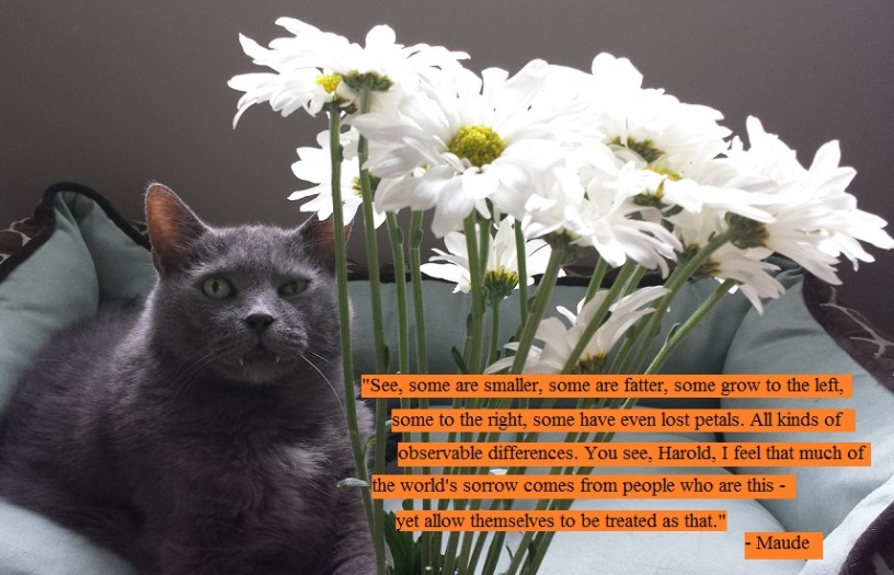 My cat and dasies and harold and maude