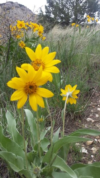 Yellow flower in a field