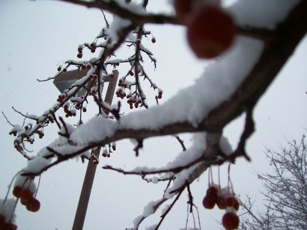 Snowy berries with lightpost